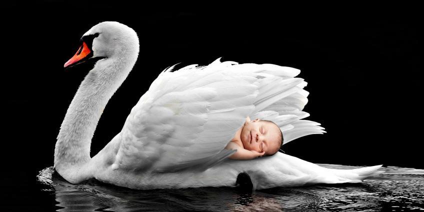 Baby in swan